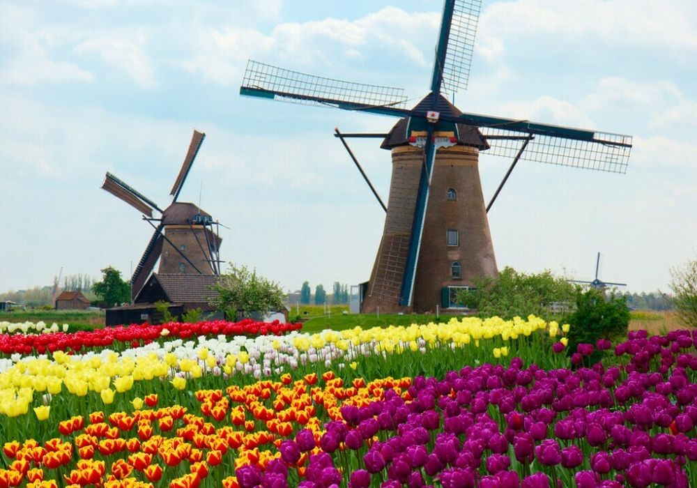 Blumenkorso in Holland